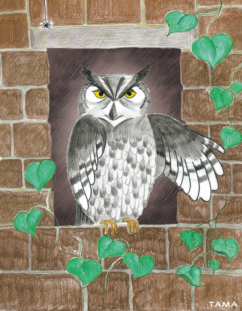 l'hibou illustration traditionelle pour le livre Astray for a Day