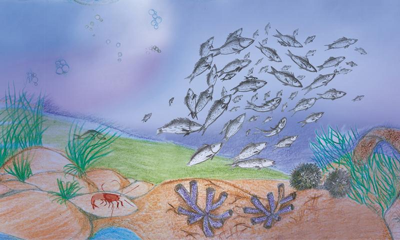 detail des poissons illustration traditionelle pour le livre Sunny Kingfisher